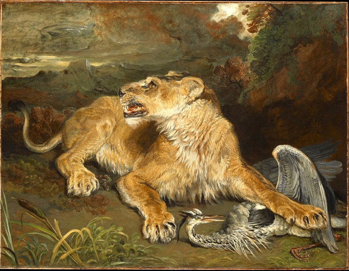 A Lioness with a Heron